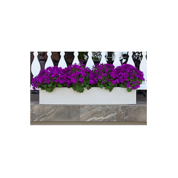 white window box with purple flowers