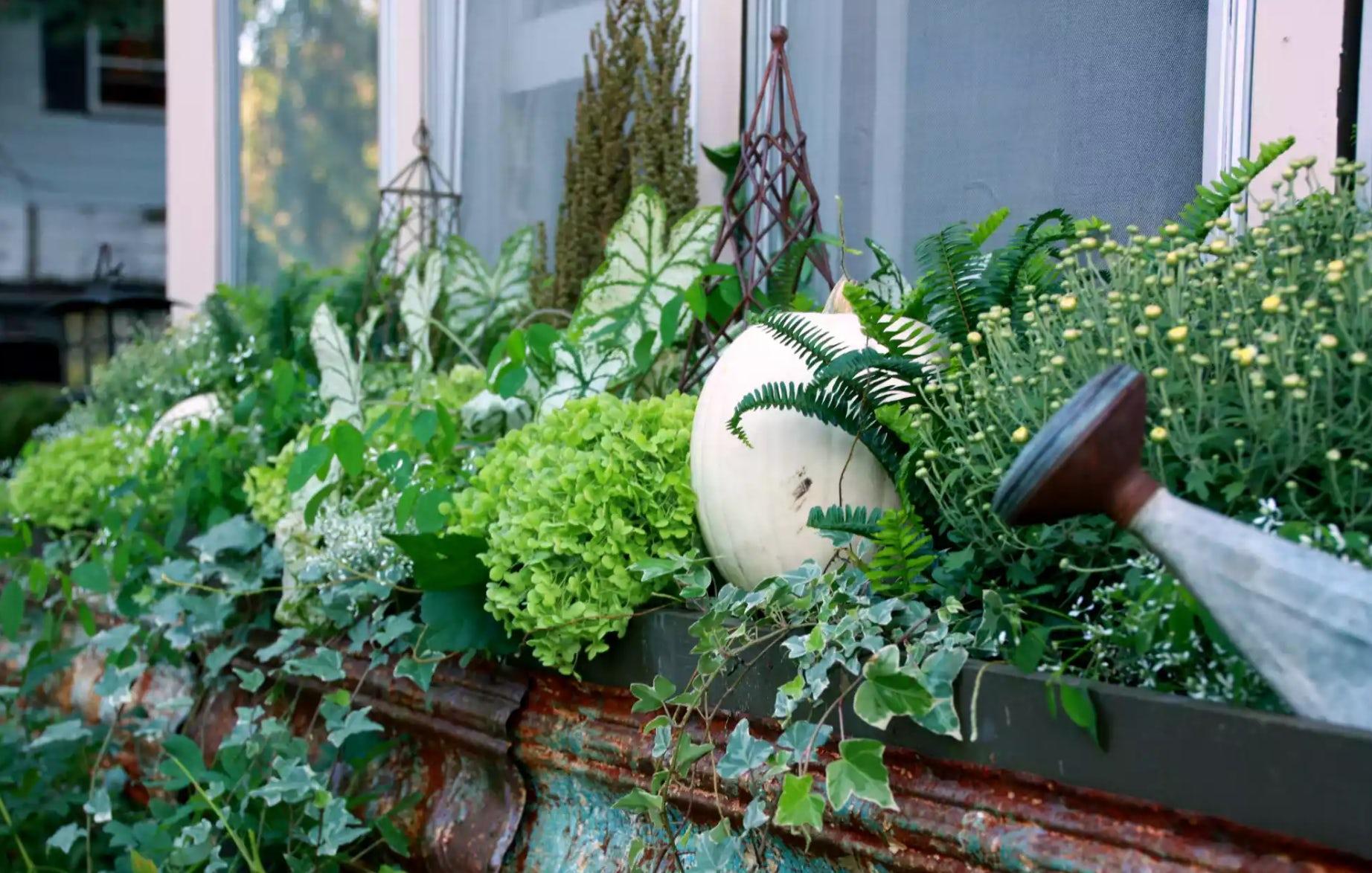 Fall Window Box idea