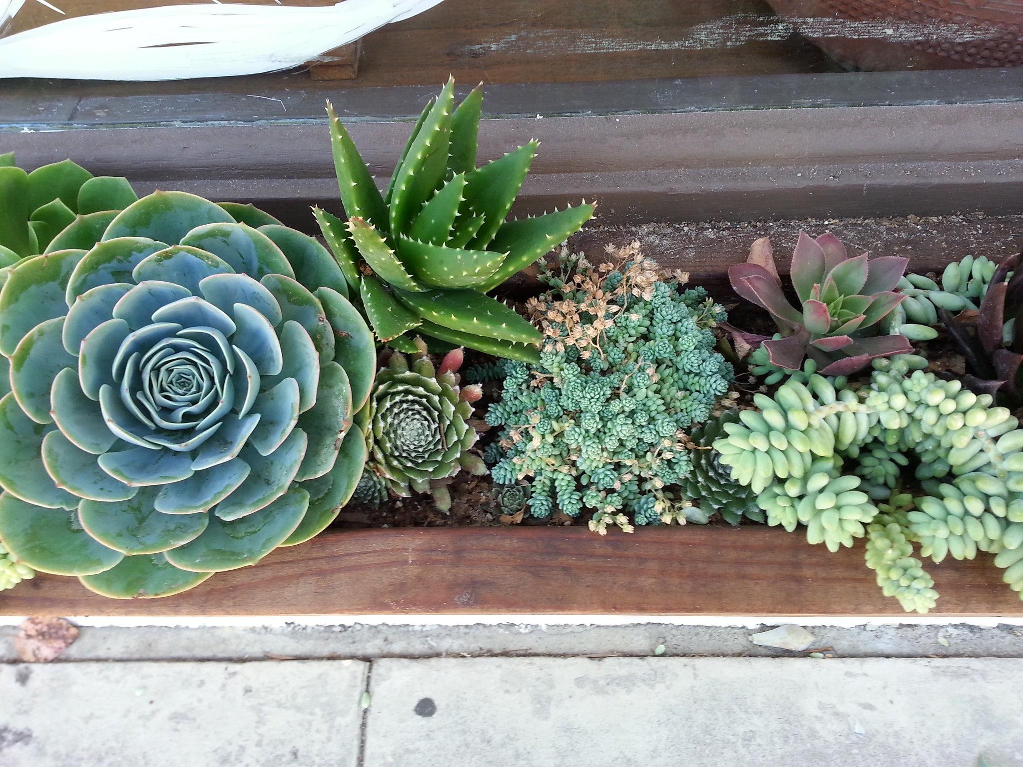 succulents, window box ideas