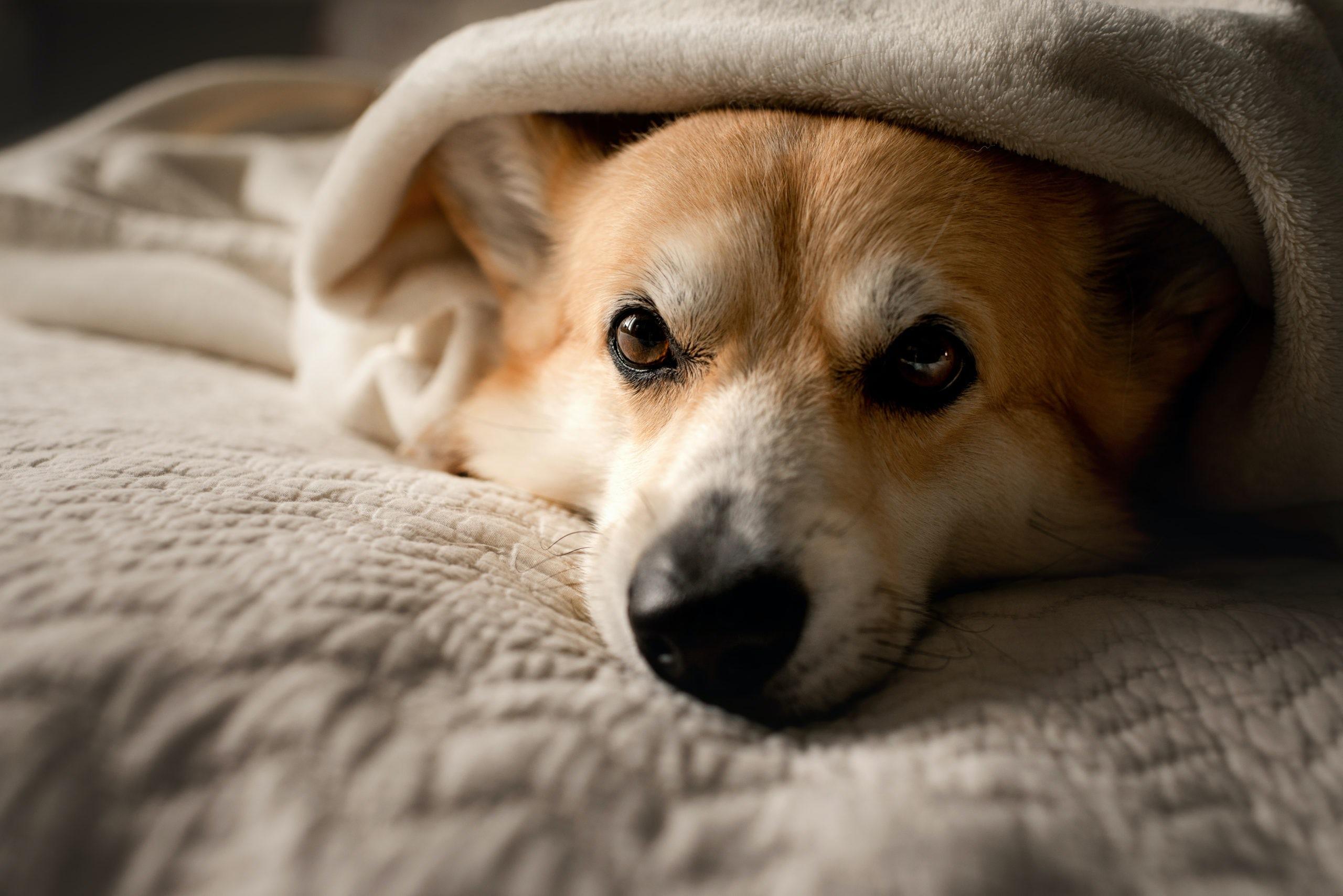 Fringe Fleece Blanket